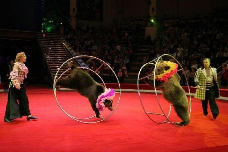 фото Столичный цирк