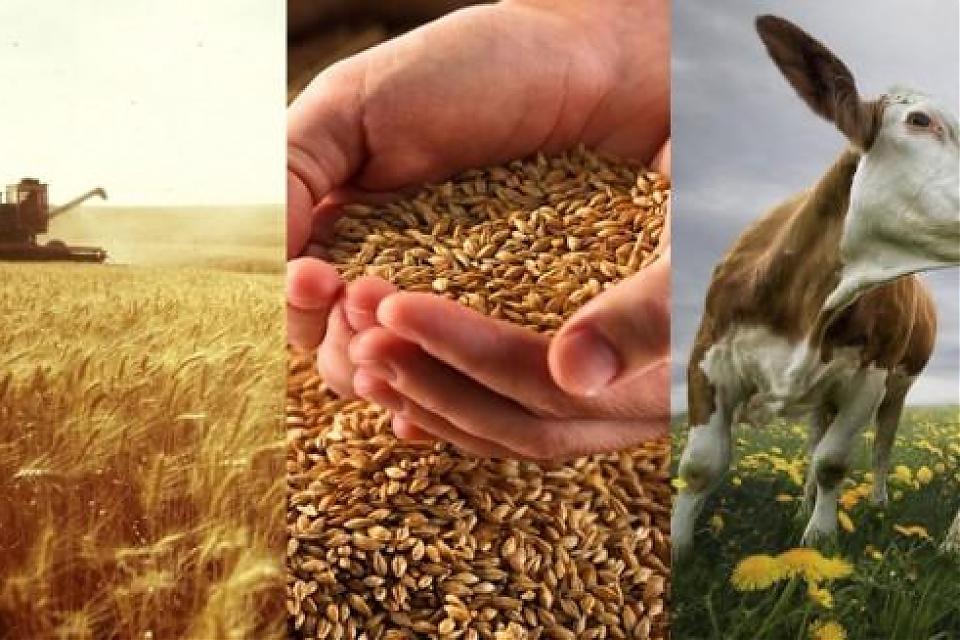 фото Завтра в Астане открывается выставка сельского хозяйства
